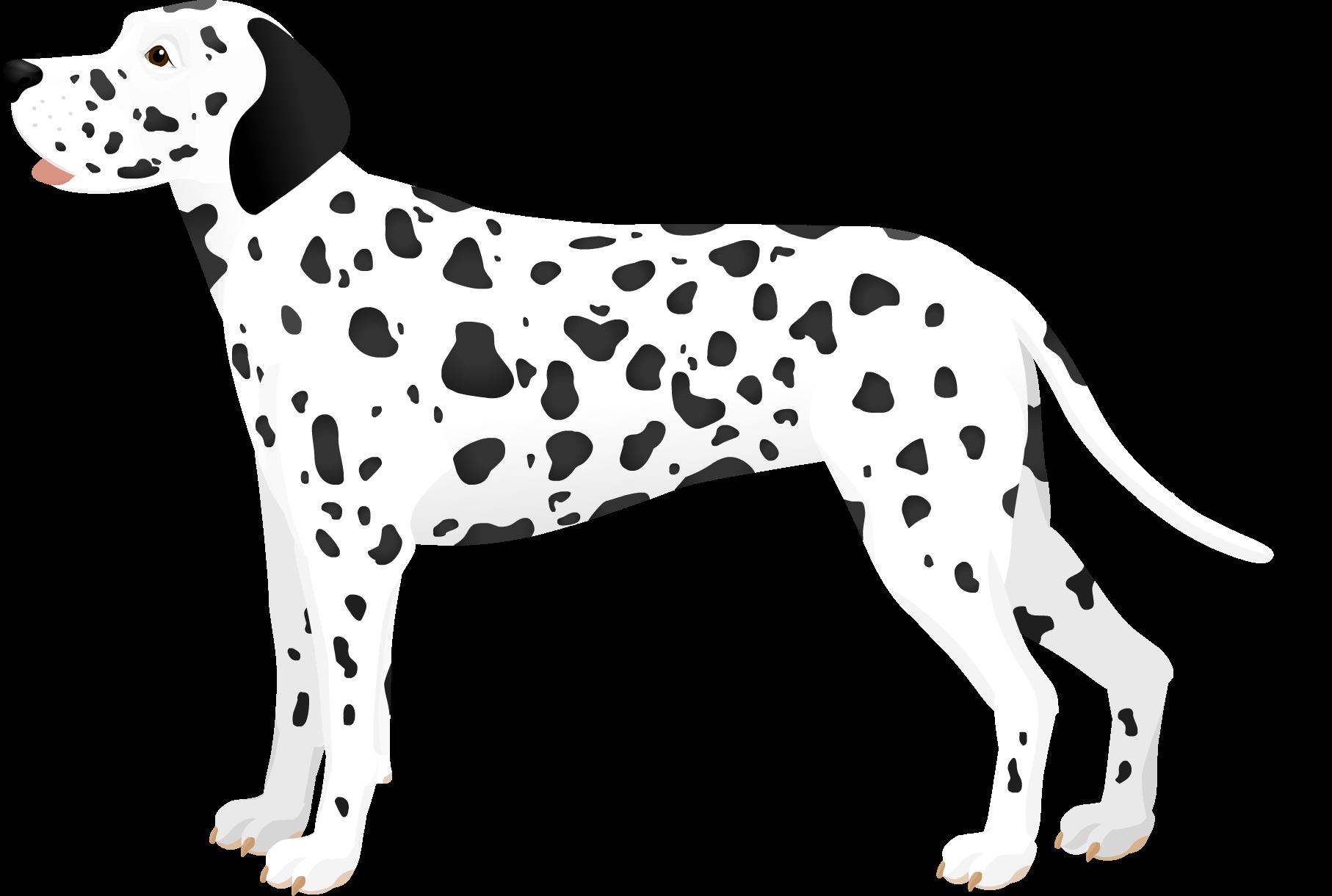 dalmatynczyk